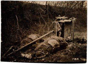 World War One (WWI): Dead horses with wagon